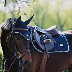 Midnight blue   #equestrian #equestrianstockholm #horse #horses #equestrianperformance