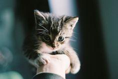 カワイイ猫画像 05|ねこLatte+