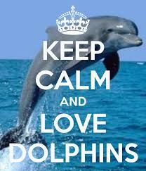 keep calm and love dolphins More