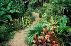 Striking tropical flowers may bloom continuously in your landscape, bringing sweet scents and fascinating forms to those who wish a departure from the ordinary.