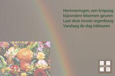 De regenboog kleuren