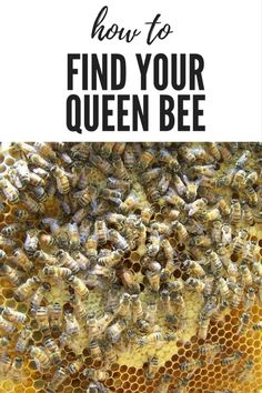How to find the Queen bee OR - Where's Waldo How to locate the queen bee in the hive. Beekeeping For Beginners, Bee Swarm, Raising Bees, Raising Ducks, Bee Boxes, Wheres Waldo, Backyard Beekeeping, Save The Bees, How To Keep Bees