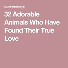 Adorable Animals Who Have Found Their True Love Adorable - 32 adorable animals