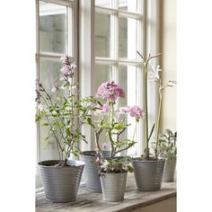 Grey Garden Plant Pots  - Set of 5 with plants
