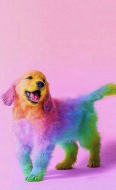 60 funny furry animals to brighten your day rainbow animals brighten day funny furry rainbow lustige tiere Baby Animals Super Cute, Cute Little Animals, Cute Funny Animals, Cute Cats, Funny Dogs, Funny Animal Jokes, Animal Humor, Little Dogs, Baby Animals Pictures
