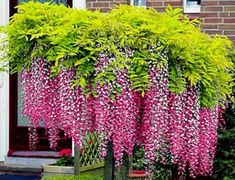 Outdoor Shutters, Patio Roof, Spanish Style, Wisteria, Canopy, Inspiration, Pergola Ideas, Gardening, Funny