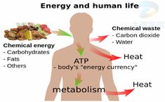 Boost metabolism naturally without resorting to pills that are full of chemicals and caffeine. One of the most holistic therapies is virgin coconut oil Chemical Waste, Getting More Energy, Systems Biology, Salud Natural, Chemical Reactions, Boost Your Metabolism, Human Body, Stress, Healthy Life