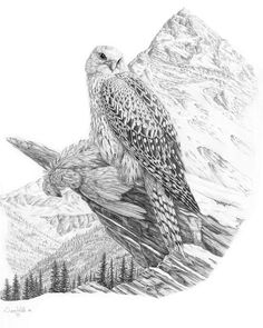 Arctic Painting - Arctic Gyrfalcon by Dave Hills