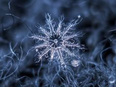 Beautiful macro snowflake!