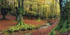 Excursión por tres hayedos excepcionales de España en otoño: Cuando los bosques se tiñen con ocres, rojizos, naranjas y amarillos invitan a descubrir rincones de radiante belleza