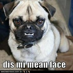 You ever seen Twilight?  This is the pug edition!
