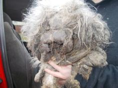 Mia was found covered in matted fur and feces and suffering from open wounds, in what appears to be a case of shocking neglect. Demand justice for this innocent dog.