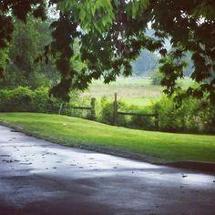 A rainy Kentucky day. First Eyeem Photo Day Rainy Days Rain Drops Raining Outside Beauty In Nature Tree Nature Kentucky