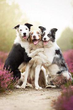 에엥헤~........RT @roux_isabelle: Amitié canine :)