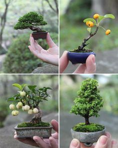 Bonsai - the Japanese art form using miniature trees grown in containers. Amazing and cute.