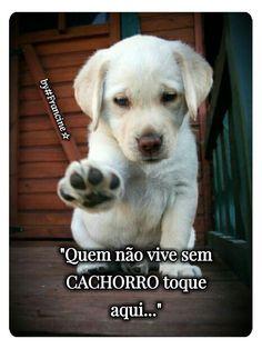 EU!!! #petmeupet #cachorro #filhode4patas #maedepet #maedecachorro #paidecachorro #filhote #cachorroehrudodebom
