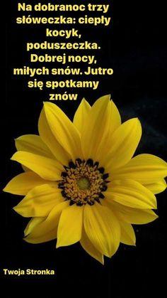 Humor, Polish Sayings, Good Night, Humour, Funny Photos, Funny Humor, Comedy, Lifting Humor, Jokes
