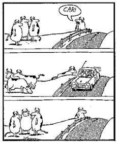 The Far Side comics featuring cows were always my favorite :)