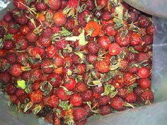 Foraging: Rose Hips | The Browning Homestead