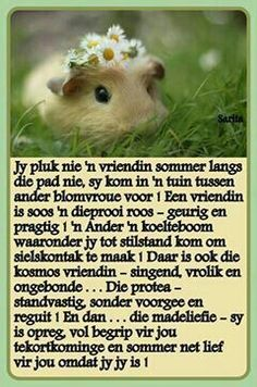 Jy pluk nie n vriendin sommer langs die pad nie, . Strong Quotes, Wise Quotes, Daily Quotes, Wise Sayings, Famous Quotes, Qoutes, Good Night Wishes, Good Morning Good Night, Inspirational Thoughts