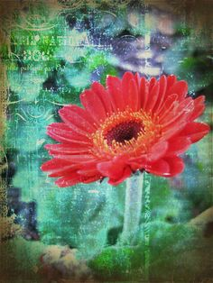 Gerbera Daisy. Taken April 2012. Textures and a lot of photomanipulations added. This is one of my favorites so far.