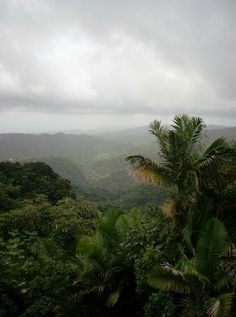 The El Yunque Rain Forest: Puerto Rico
