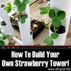 This video gives us a great project idea - to build a strawberry tower using 4-inch PVC pipe! The creator of this tutorial has gone to a lot of trouble to show each step of the project clearly and to give detailed instructions. The towers can be made to any size and are a brilliant way to make use of vertical space so that a lot of plants can be grown in a small area.