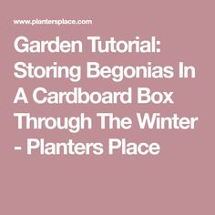 Garden Tutorial: Storing Begonias In A Cardboard Box Through The Winter - Planters Place