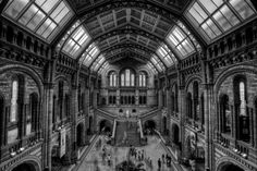 "Natural History - Thank you so much to everyone for there comments and votes!    This shot is from the natural history museum in London. 9 Shot HDR.    Like me on Facebook if you like! <a href=""http://www.facebook.com/pages/Basic-Elements-Photography/1602308156575150"">FaceBook</a>      Thank You for viewing my work. If you would like to license any photos please contact me at basicelementsphoto@gmail.com"
