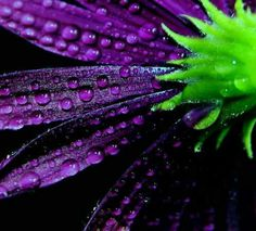 Purple and lime green