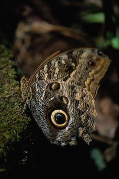 Butterfly - 50 Pictures