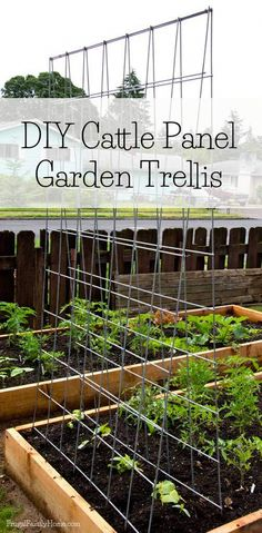 DIY Garden Trellis Here's a great way to make your own trellis. This trellis is a great way to extend your gardening space. Grow your vegetables vertically. This trellis is easy to make and folds for easy winter storage. Bean Trellis, Diy Trellis, Garden Trellis, Trellis Ideas, Trellis Design, Potager Garden, Cattle Panels, Cattle Panel Trellis, Cattle Panel Fence