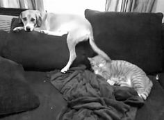 This teasing dog that won't stop hitting this cat: | 20 Animals That Are Huge Jerks