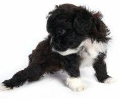 Dog Urine Remover On Pinterest Dog Urine Pet Urine And