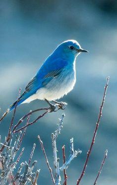 all in Bokeh Pretty Birds, Cute Birds, Beautiful Birds, Animals Beautiful, Cute Animals, World Birds, Winter Scenery, Bird Pictures, Jolie Photo