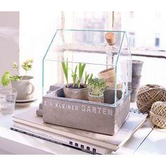 Ein kleinen Garten kannst Du auch in deiner Wohnung haben #Impressionen #garden