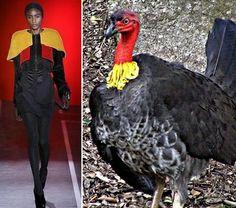 Avian Influences Fashion