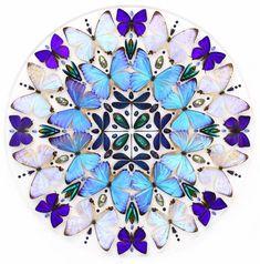 Le projetBiophilia de l'artisteChristopher Marley, qui utilise des insectes venus du monde entier pour créer desmosaïques, des mandalas et autres compos