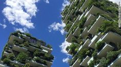 """(Weezie) Gardens in the sky: The rise of green urban architecture - July 18, 2016 -  With its balconies bursting with trees and shrubs, the """"Bosco Verticale"""" is giving rise to an entirely new take on the traditional idea of the urban jungle."""