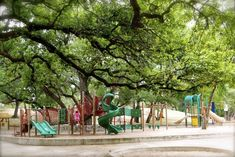 Free Fun in Austin: Free Pool Feature: Little Stacy Pool (and Playground) - awesome live oak shade tree and wading pool no deeper than 2 feet. Austin With Kids, Visit Austin, Austin Texas, Free Pool, 100 Things To Do, Local Activities, Shade Trees, Free Fun, Effortless Chic