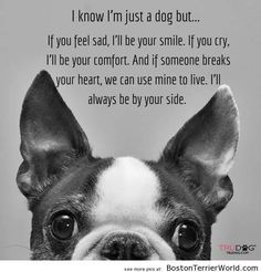 JUST a Dog? – Boston Terrier Pictures ❤❤❤ from BostonTerrierWorld.com