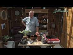 ▶ How to grow Hosta: Jeff Turner plants Hostas in pots - YouTube