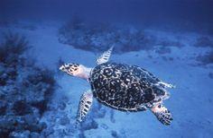 Snorkeling South Florida - Fort Lauderdale