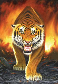 Tiger From The Embers Photograph