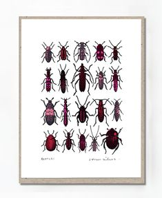 "John Dilnot Beetles Red Mini Print: These beautiful little prints by John Dilnot are hand printed and are absolute gems when framed up in little box frames. This is part of a series of original, unlimited screen prints on 152 x 203mm (6 x 8"") watercolour paper. These unlimited prints are hand titled and signed. Due to their nature, image sizes vary a little.  John has shown in many mixed and survey shows including the V&A Museum, Tate Gallery, RA Summer Exhibition, Cornerhouse Manchester…"