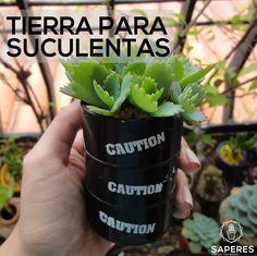 catus y suculentas Catus, Interior Garden, Cactus Y Suculentas, Green Life, Trees To Plant, Bonsai, Flower Arrangements, Succulents, Plants