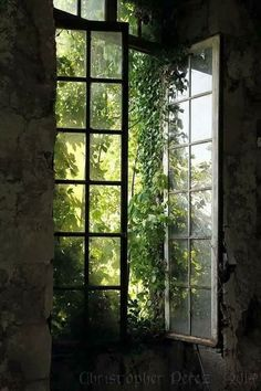 The warmth of the late afternoon sun streaming through open windows inviting the breeze to dance and swirl inside. The warmth of the late afternoon sun streaming through open windows inviting the breeze to dance and swirl inside. Dark Green Aesthetic, Nature Aesthetic, Paradis Sombre, My Love Photo, Slytherin Aesthetic, Earthship, Open Window, Abandoned Places, Abandoned Houses