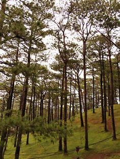 Baguio, Philippines Beautiful Places To Visit, Places To See, Baguio Philippines, Philippines Destinations, Sagada, Baguio City, City Aesthetic, Cute Disney Wallpaper, Tourist Spots