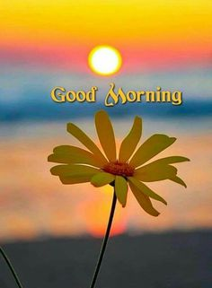 Good Morning India, Very Good Morning Images, Photos Of Good Night, Good Morning Images Flowers, Good Morning Roses, Good Morning Images Download, Morning Love, Good Morning Picture, Good Morning Messages