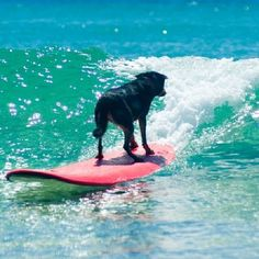 Welcome to Blackdog Surf School Byron Bay, the most personalised surf school in town! We offer the best ratio for a learn to surf group lesson in Byron Bay. Beach Waves, Ocean Beach, Hawaii, Poor Dog, Learn To Surf, Surfs Up, Byron Bay, Australia Travel, Surfboard